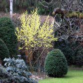 Gartengestaltung mit Gehölzen