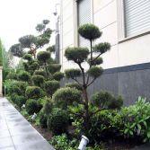 Gartengestaltung mal anders